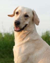 Praxishund Emma immer auf Achse im Raum Hannover