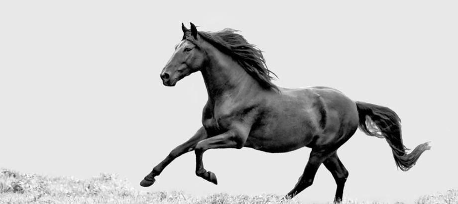 Tierarztpraxis Petra Meyer, ambulante Pferdefahrpraxis im Raum Hannover